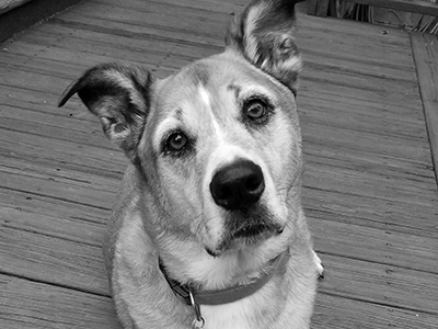 Chester BW 400 x 300